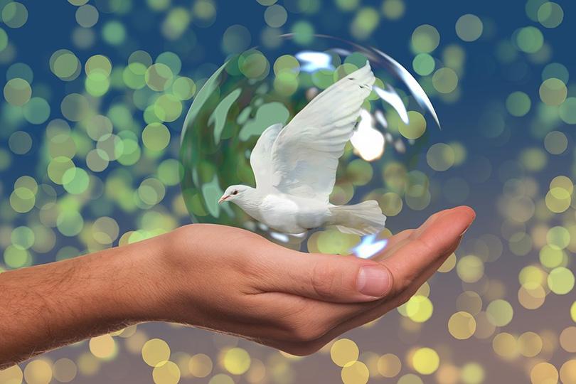 السلام والتنمية في إطار الإسلام