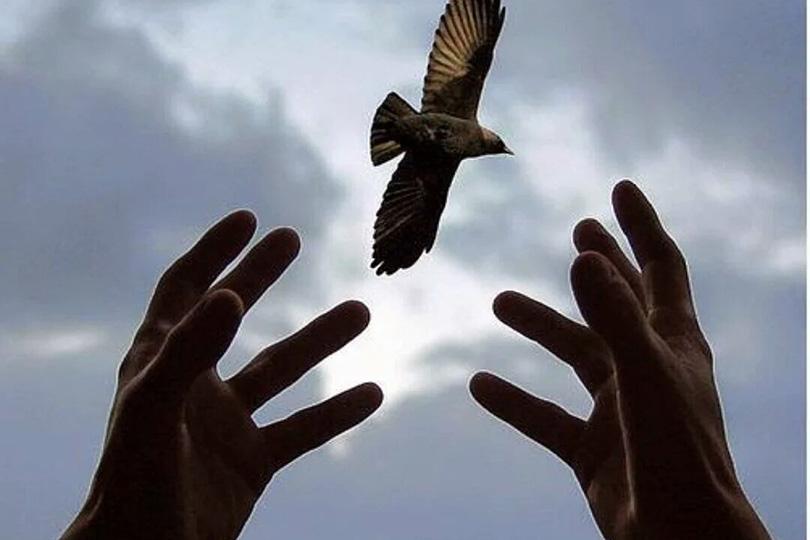 أخلاق التقدم:  ثقافة العفو والمغفرة في المجتمع الإيماني