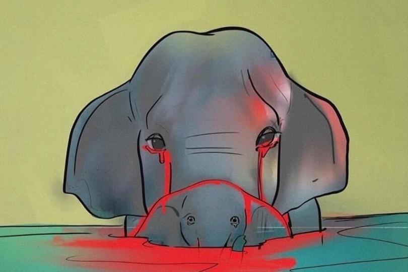 ماهي قصة الفيل الحامل التي أشعلت مواقع التواصل الاجتماعي؟