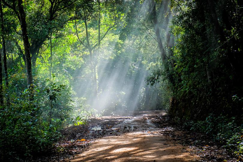 علماء يقترحون فكرة الأشجار المعدلة وراثيًا لتحسين المناخ