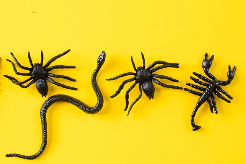 تعرف على فوائد سم العنكبوت والأفعى