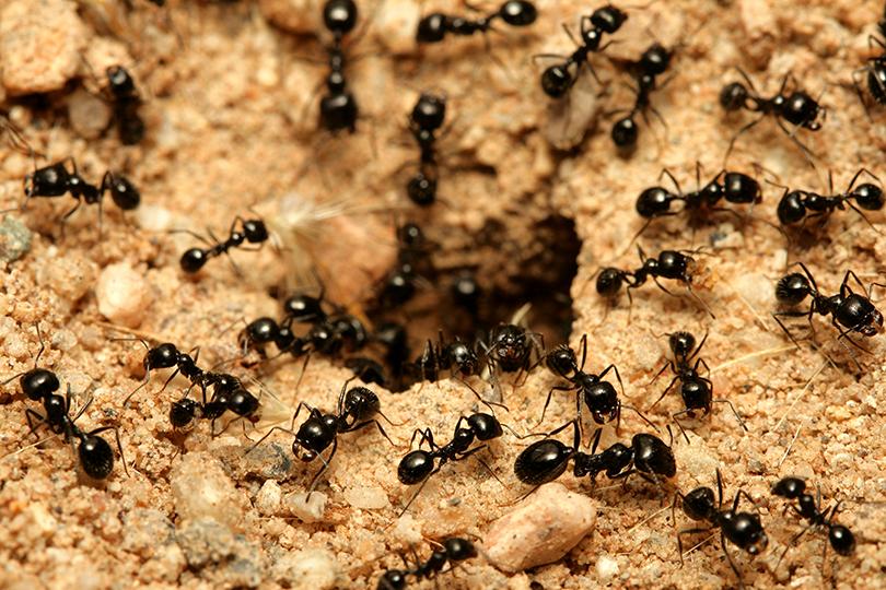 ما لا تعرفه عن النمل فوائد فريدة قد تدفعك لتربيها في البيت