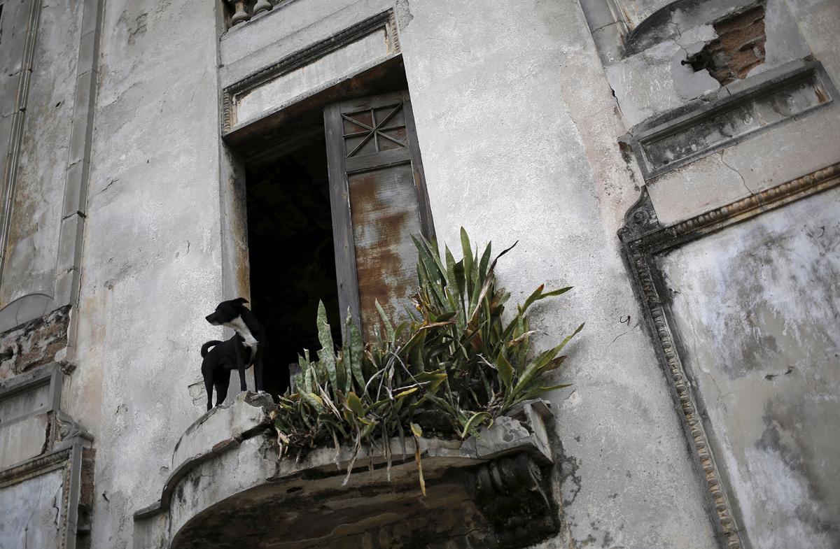 كوبا.. كلب يطل من شرفة احد المنازل القديمة