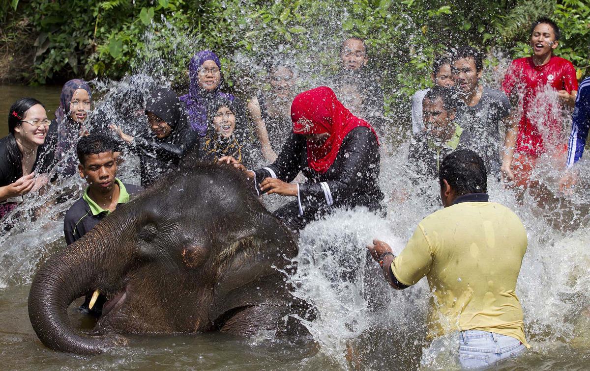 زوار لمركز كوالا غانداه لحماية الفيل في ماليزيا يتفاعلون مع رش الفيل لهم بالماء اأثناء السباحة مع في 24 مايو 2012. مركز الحفظ هو المسؤول عن نقل الأفيال من مناطق التعدي البشري في شبه الجزيرة ماليزيا وكذلك موطن الأفيال اليتيمة التي لم تكن جزءا من  عائلة، تم نقل 600 فيل منذ إنشائها في عام 1989.