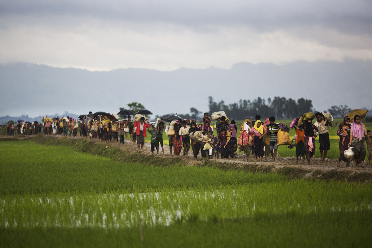 عدد من افراد اقلية الروهينغا الدينية فى بورما يمرون عبر حقول الارز بعد عبور الحدود الى بنغلاديش بالقرب من بازار كوكس فى 1 سبتمبر.