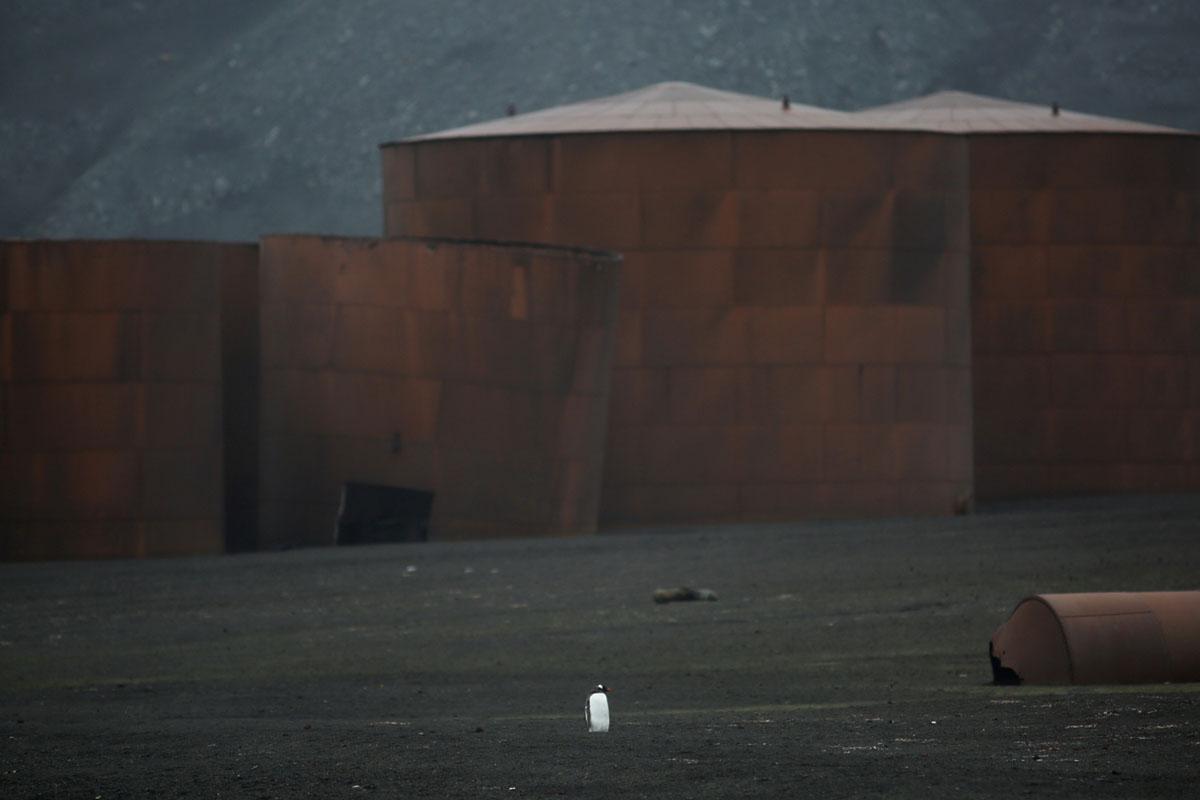 مصنع لصيد الحيتان مهجور في جزيرة الخداع في 17 فبراير، 2018.
