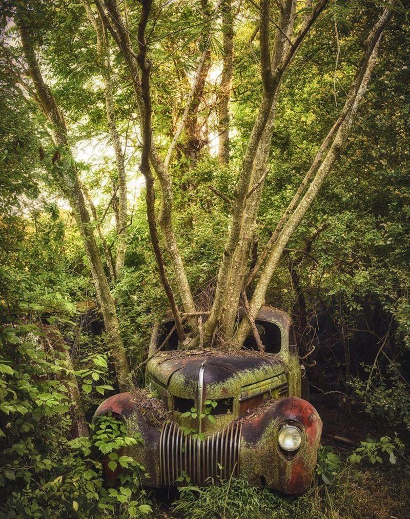 في رحلاته ، التقط كلاين صورا لسيارات متهالكة من علامات تجارية شتى، منها بورش وكاديلاك وفولكس فاغن، بالإضافة إلى رتل كامل من سيارات جيب عسكرية
