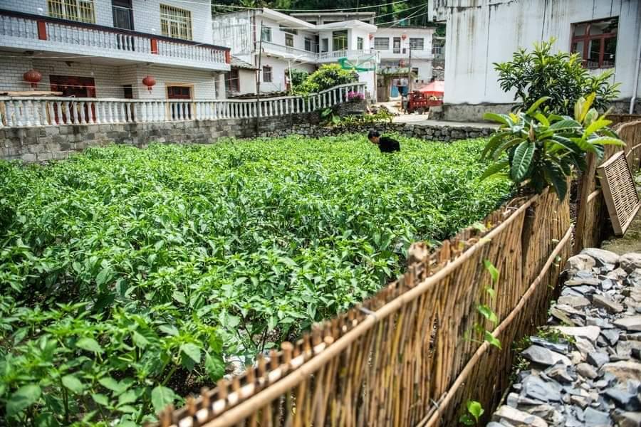 زراعة الخضروات في ساحات منزلية في القرى جنوب غربي الصين   في الصور الملتقطة يوم 6 يوليو 2020، قرويون يعملون في ساحاتهم المنزلية لزراعة الخضروات في حي ليوتشي بمدينة ليوبانشوي في مقاطعة قويتشو جنوب غربي الصين.    واستخدم الحي المذكور 24.4 ألف ساحة منزلية لزراعة الخضروات منذ مايو 2019، في مسعى لتحسين ظروف الإسكان وتعزيز جودة المعيشة للمواطنين الريفيين.