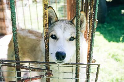 ما هي الدوافع وراء ظاهرة تعذيب الحيوانات؟